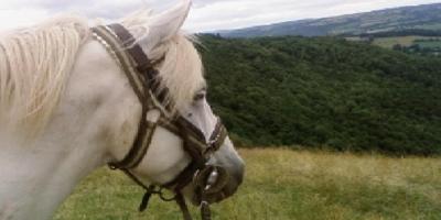 Randonnée à cheval au Domaine de la Pommeraye